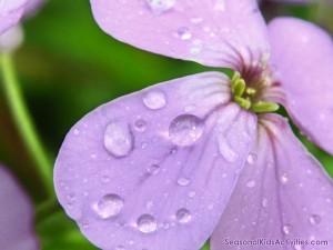 flower-1024